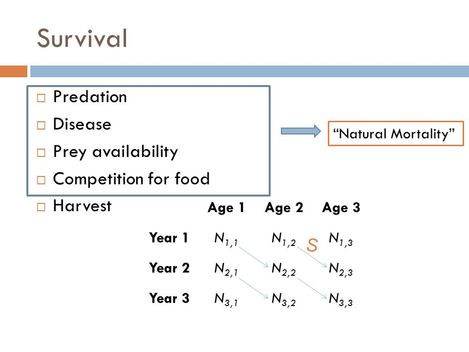 """Survival  Predation  Disease  Prey availability  Competition for food  Harvest """"Natural Mortality"""" Age 1Age 2Age 3 Year 1N 1,1 N 1,2 N 1,3 Year 2"""
