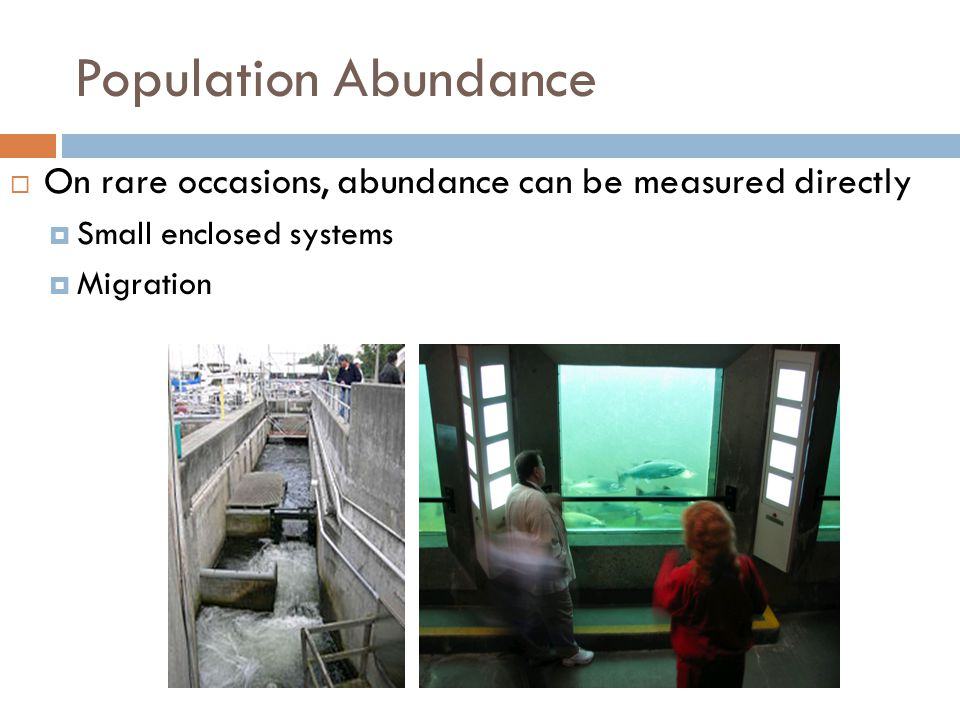 Population Abundance  On rare occasions, abundance can be measured directly  Small enclosed systems  Migration