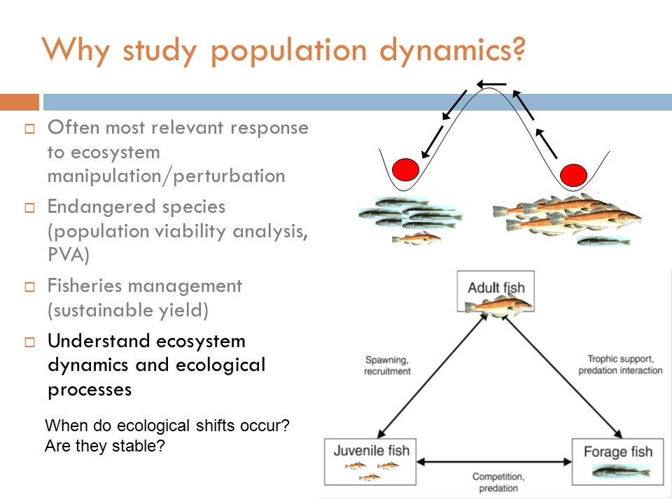 Why study population dynamics?  Often most relevant response to ecosystem manipulation/perturbation  Endangered species (population viability analys