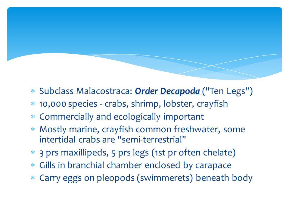  Subclass Malacostraca: Order Decapoda (
