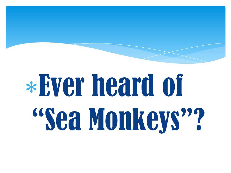 " Ever heard of ""Sea Monkeys""?"