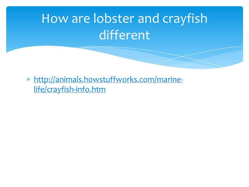  http://animals.howstuffworks.com/marine- life/crayfish-info.htm http://animals.howstuffworks.com/marine- life/crayfish-info.htm How are lobster and