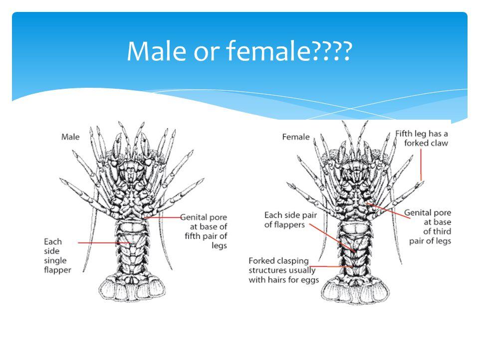 Male or female????