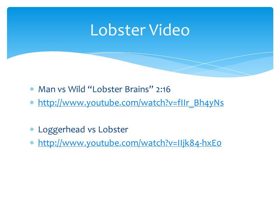 " Man vs Wild ""Lobster Brains"" 2:16  http://www.youtube.com/watch?v=fIIr_Bh4yNs http://www.youtube.com/watch?v=fIIr_Bh4yNs  Loggerhead vs Lobster "