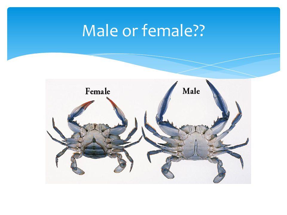 Male or female??