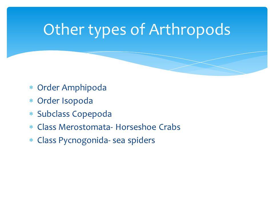  Order Amphipoda  Order Isopoda  Subclass Copepoda  Class Merostomata- Horseshoe Crabs  Class Pycnogonida- sea spiders Other types of Arthropods