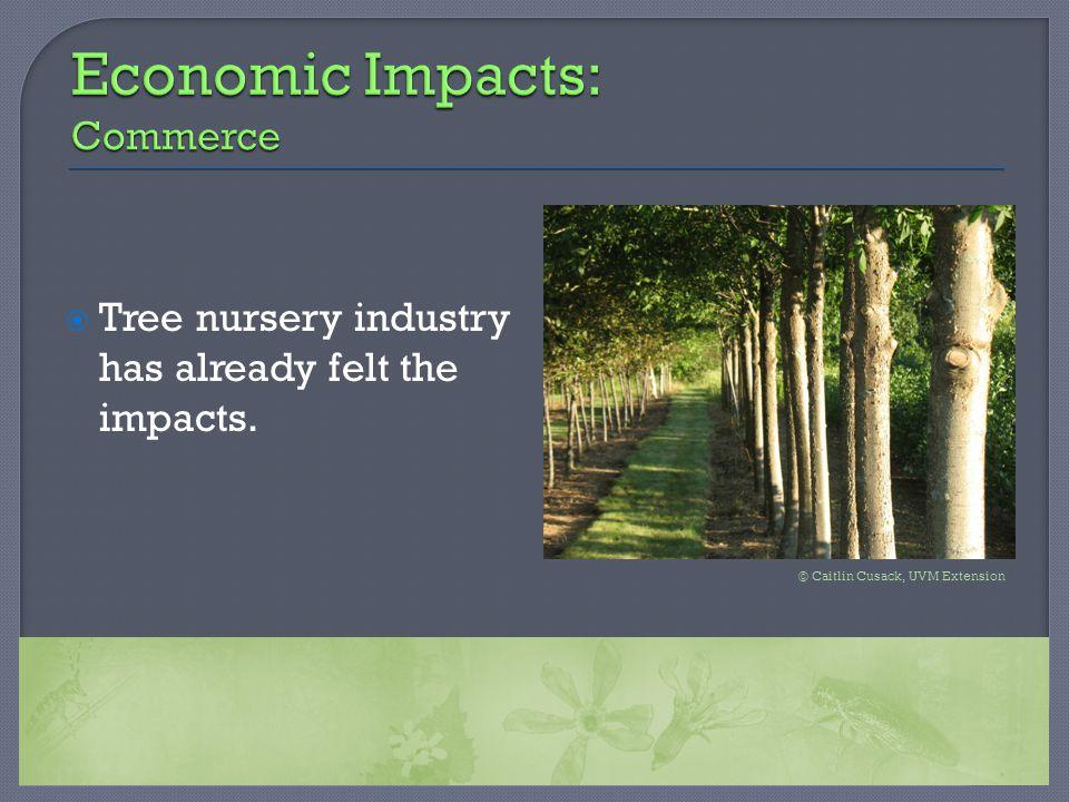  Tree nursery industry has already felt the impacts. © Caitlin Cusack, UVM Extension