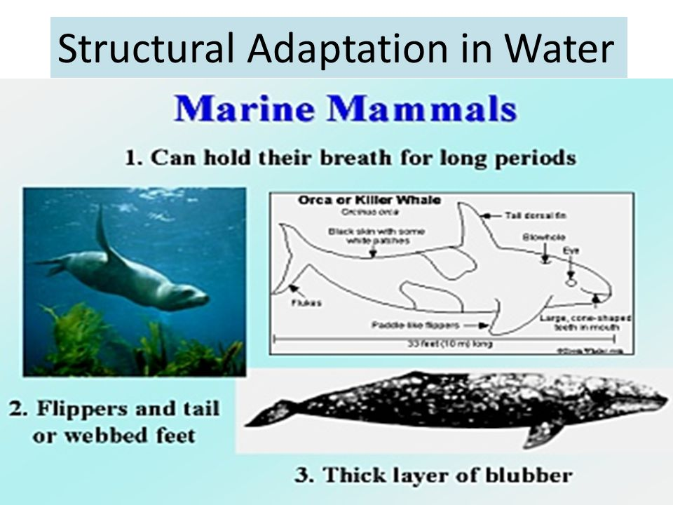 Structural Adaptation in Water