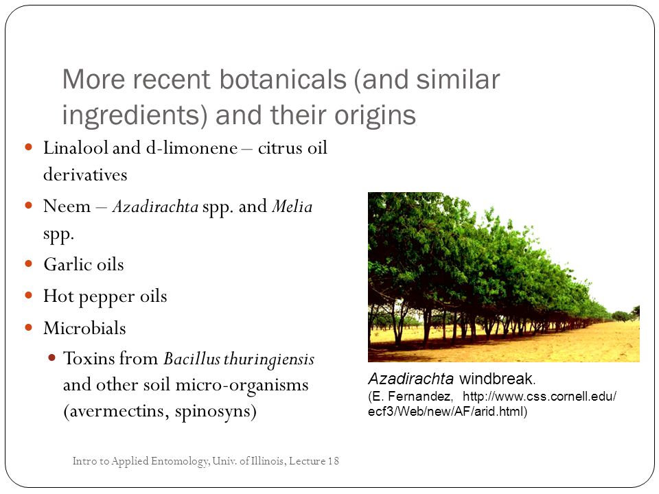More recent botanicals (and similar ingredients) and their origins Linalool and d-limonene – citrus oil derivatives Neem – Azadirachta spp. and Melia