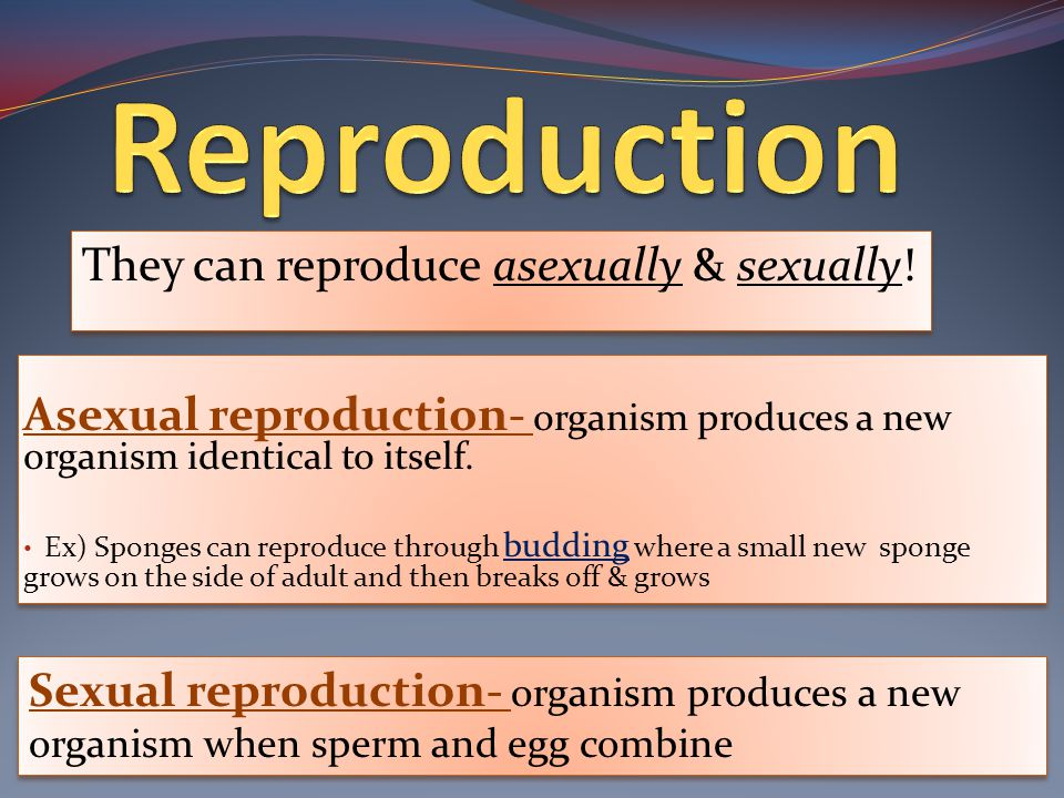 Asexual reproduction- organism produces a new organism identical to itself.