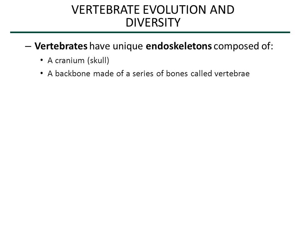 Vertebra Cranium (protects brain) Figure 17.26