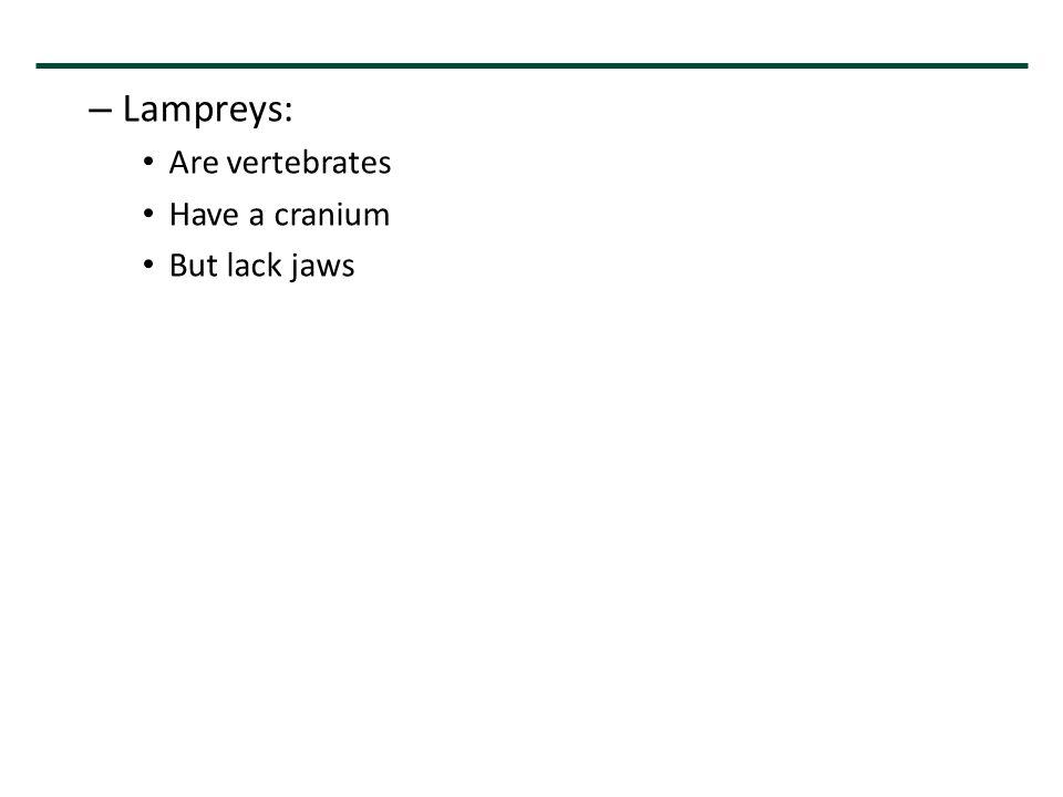 – Lampreys: Are vertebrates Have a cranium But lack jaws