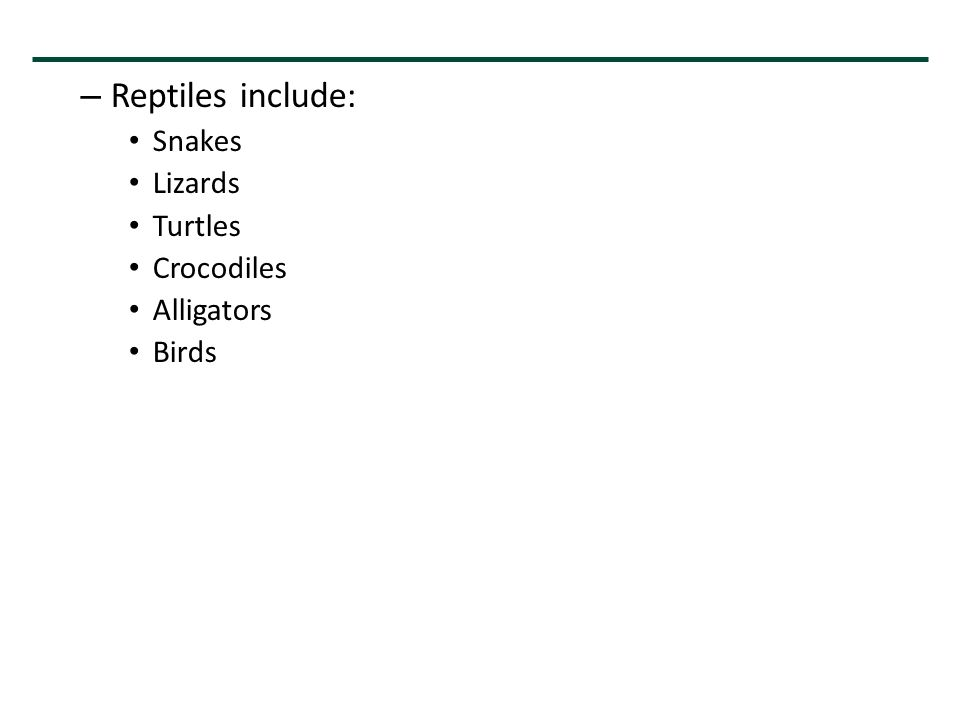 – Reptiles include: Snakes Lizards Turtles Crocodiles Alligators Birds