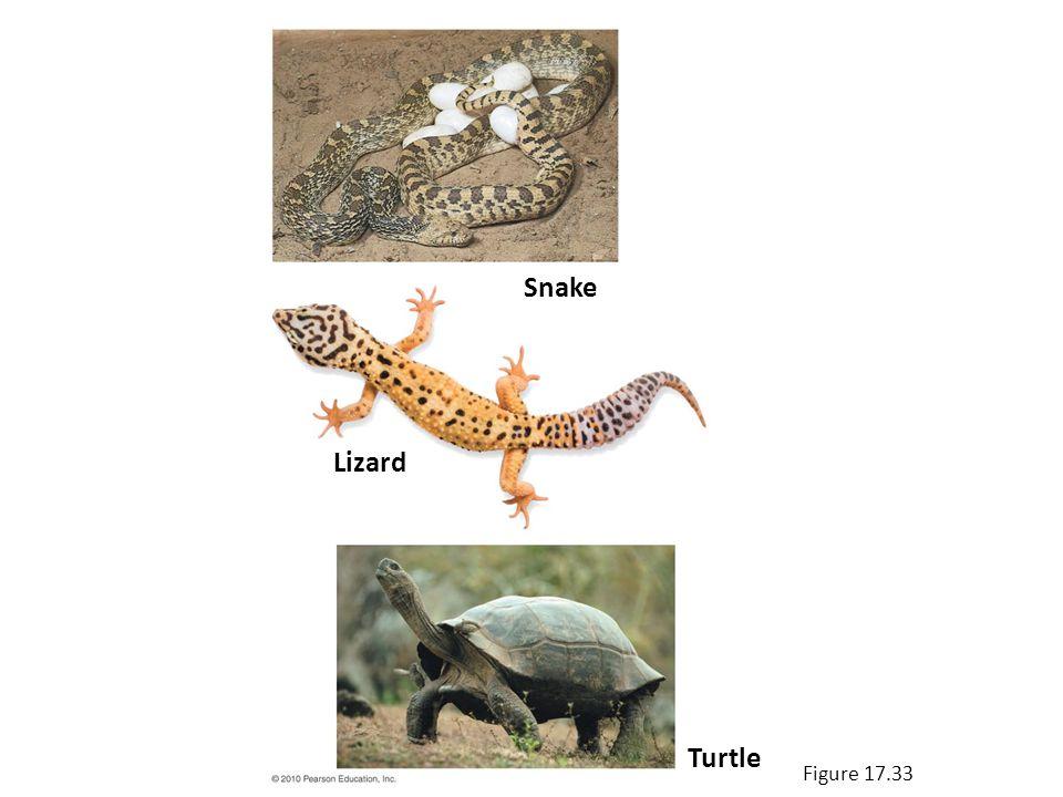Figure 17.33 Snake Lizard Turtle