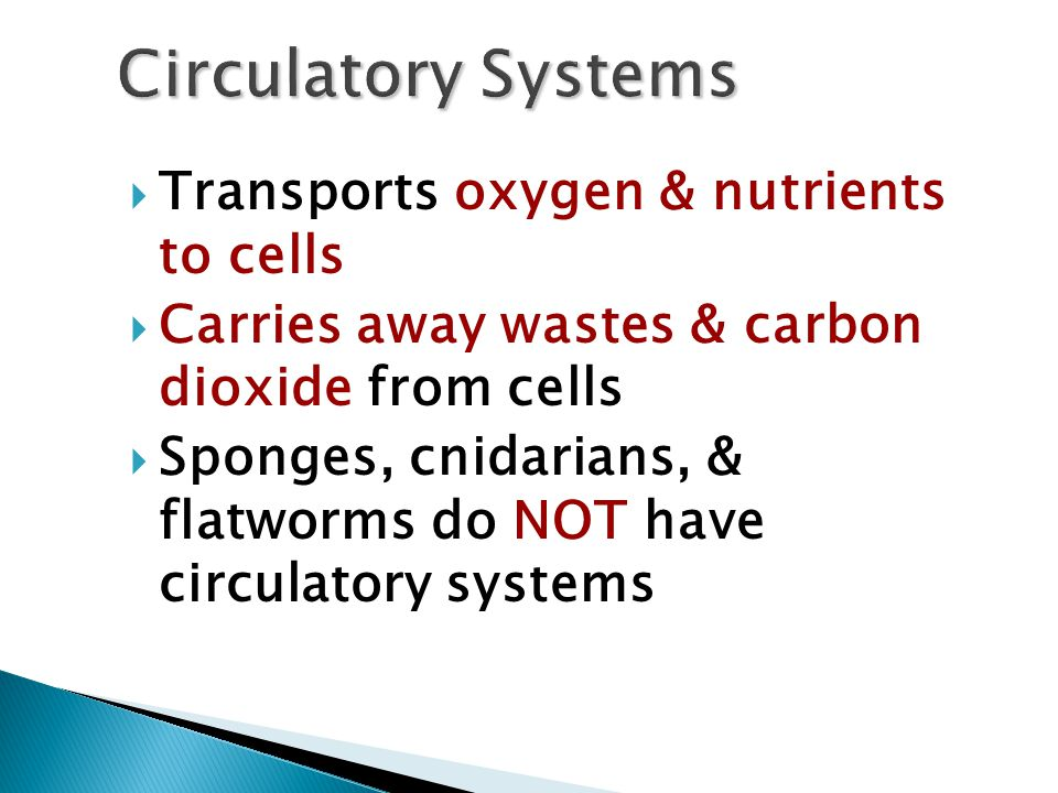  Transports oxygen & nutrients to cells  Carries away wastes & carbon dioxide from cells  Sponges, cnidarians, & flatworms do NOT have circulatory