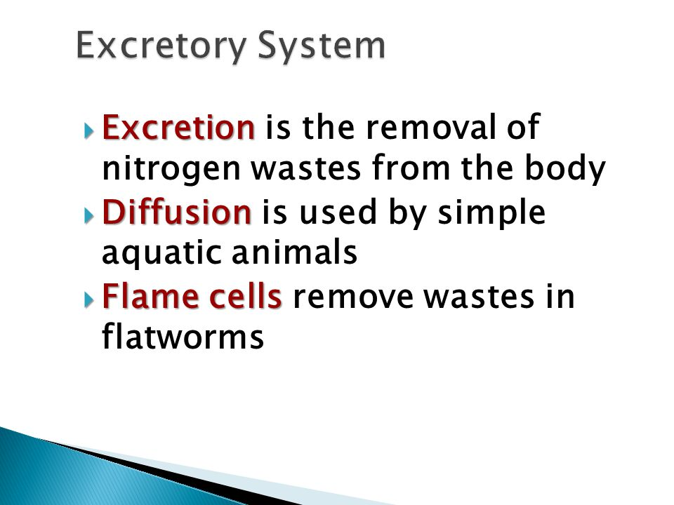  Excretion  Excretion is the removal of nitrogen wastes from the body  Diffusion  Diffusion is used by simple aquatic animals  Flame cells  Flam