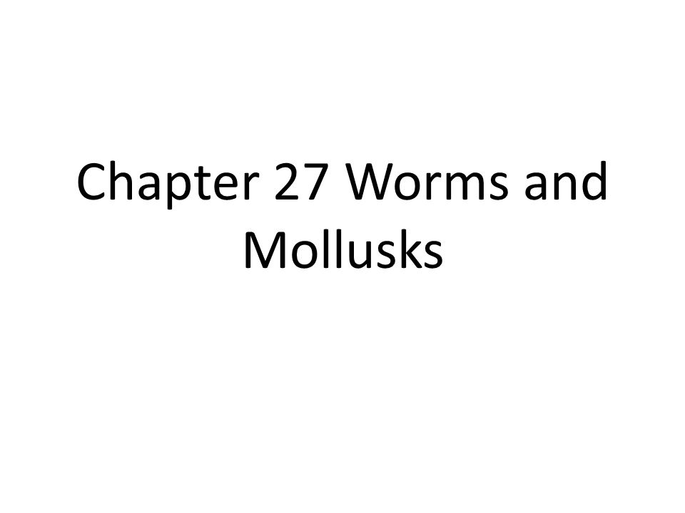 27-1 Flatworms