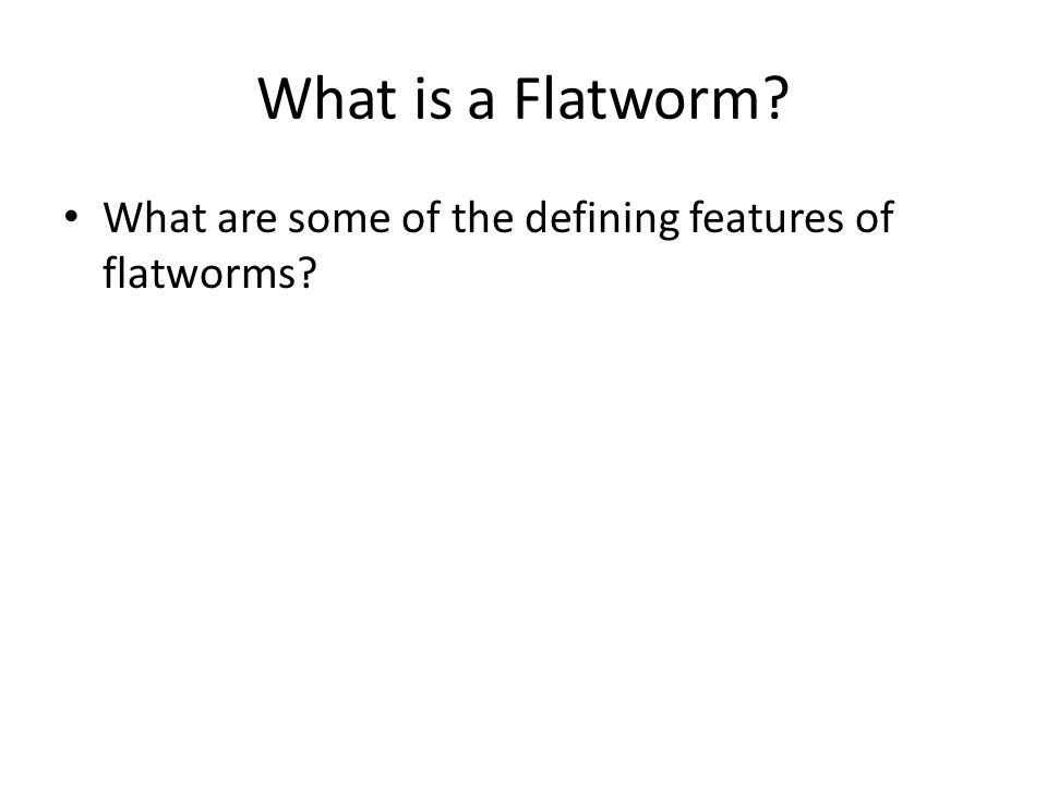 What is a flatworm.