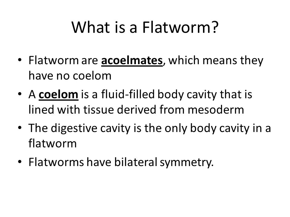 Form and Function in Flatworms Tapeworms – Tapeworms are long, flat parasitic worms that are adapted to life inside the intestines of their host.