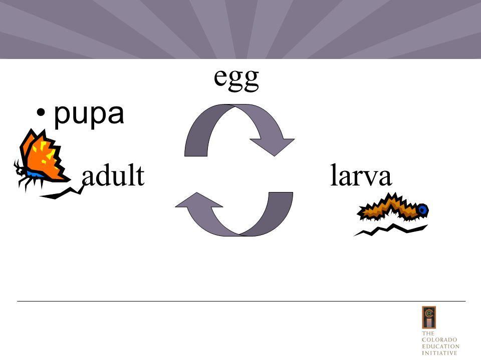 pupa egg larvaadult