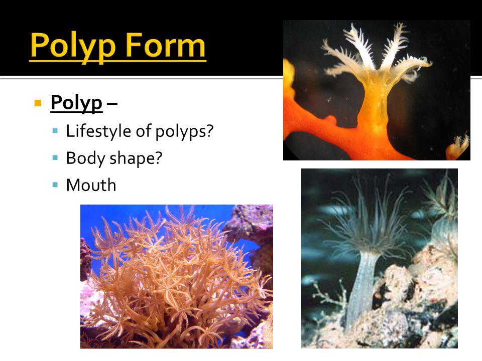  Polyp –  Lifestyle of polyps?  Body shape?  Mouth