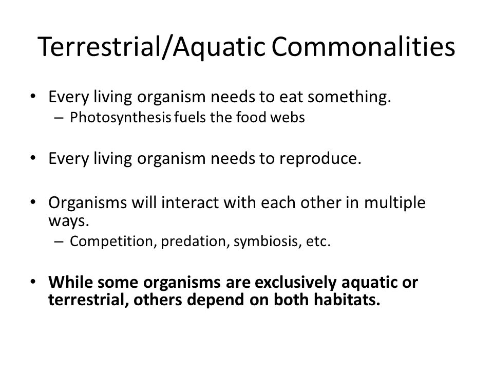 Terrestrial/Aquatic Commonalities Every living organism needs to eat something.