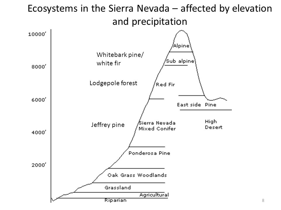 8 Ecosystems in the Sierra Nevada – affected by elevation and precipitation Lodgepole forest Whitebark pine/ white fir Jeffrey pine