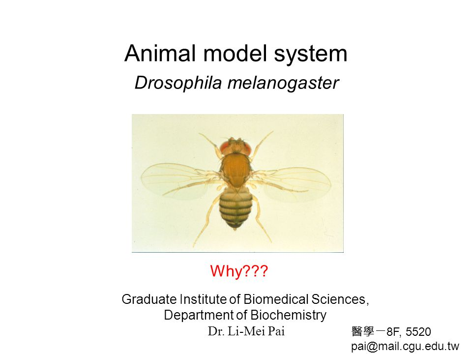 Animal model system Drosophila melanogaster Graduate Institute of Biomedical Sciences, Department of Biochemistry Dr. Li-Mei Pai Why??? 醫學一 8F, 5520 p