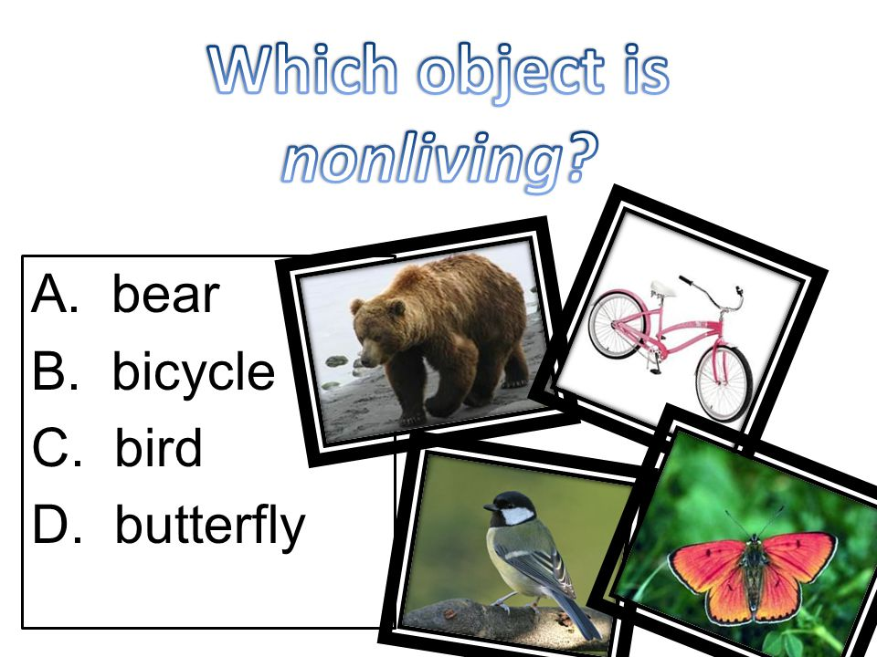 A. bear B. bicycle C. bird D. butterfly