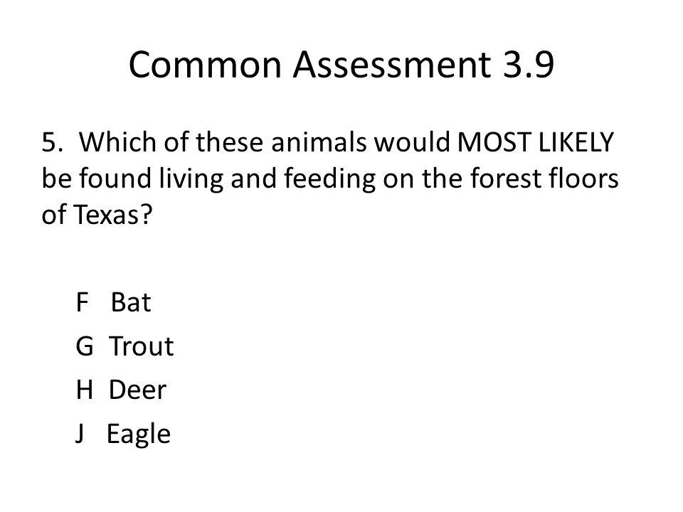 Common Assessment 3.9 5.