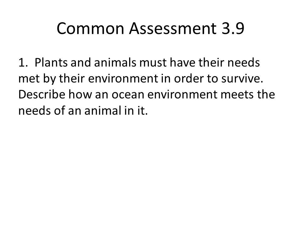 Common Assessment 3.9 1.