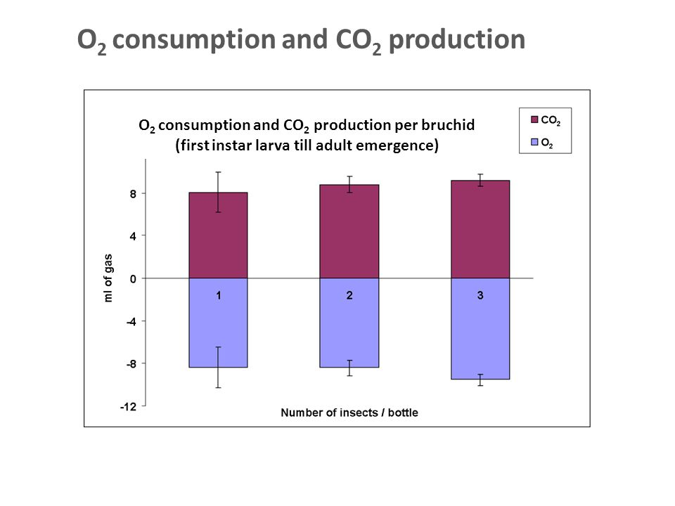 O 2 consumption and CO 2 production O 2 consumption and CO 2 production per bruchid (first instar larva till adult emergence)