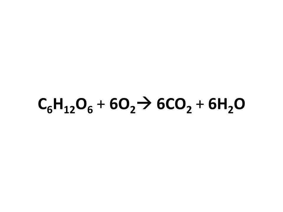C 6 H 12 O 6 + 6O 2  6CO 2 + 6H 2 O