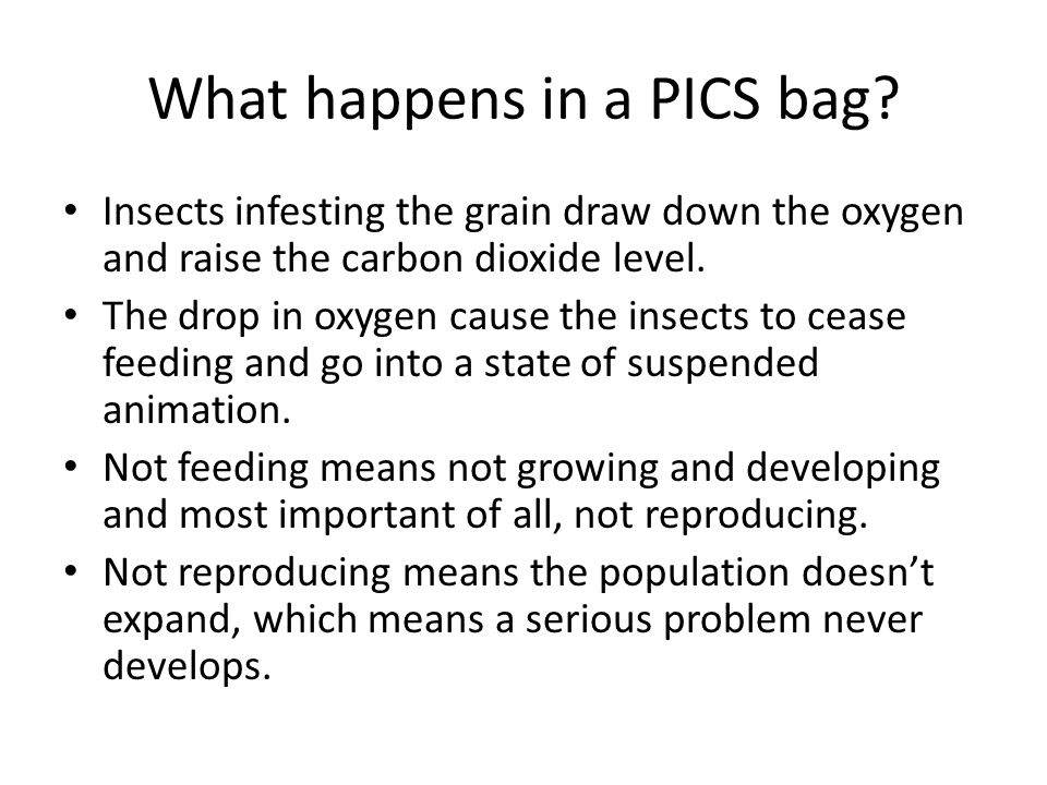 What happens in a PICS bag? Insects infesting the grain draw down the oxygen and raise the carbon dioxide level. The drop in oxygen cause the insects