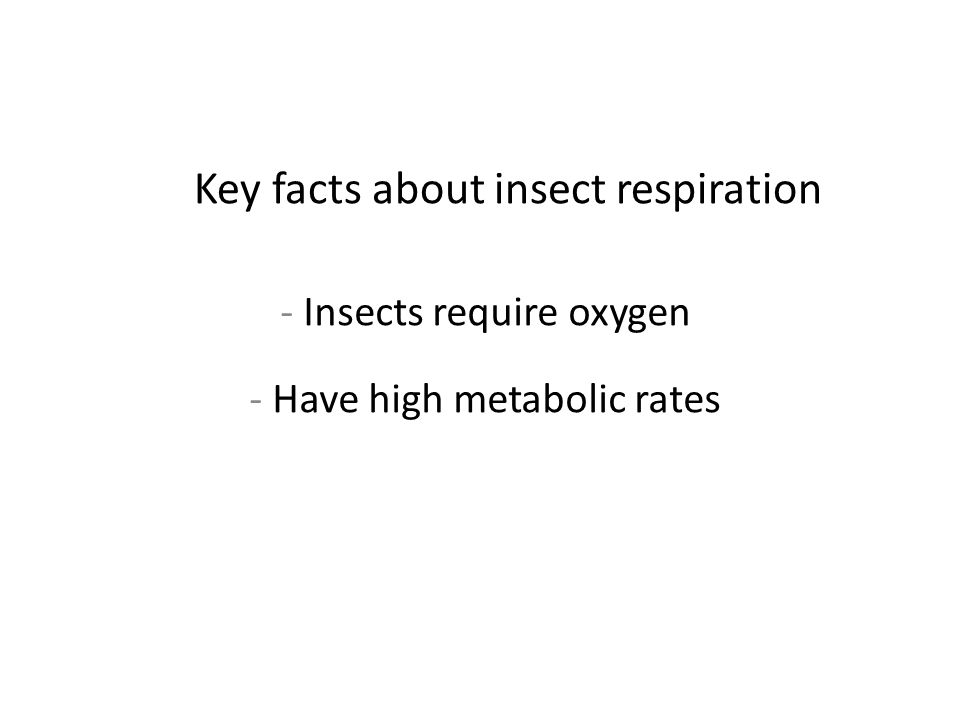 Key facts about insect respiration - Insects require oxygen - Have high metabolic rates