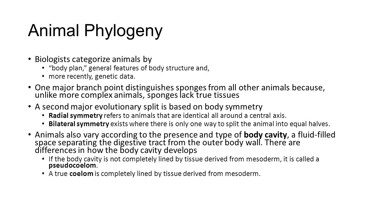 """Animal Phylogeny Biologists categorize animals by """"body plan,"""" general features of body structure and, more recently, genetic data. One major branch p"""