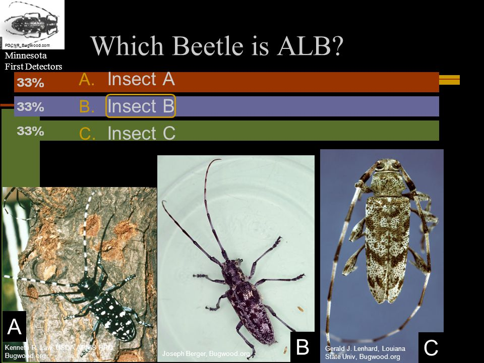 Minnesota First Detectors Which Beetle is ALB. A.