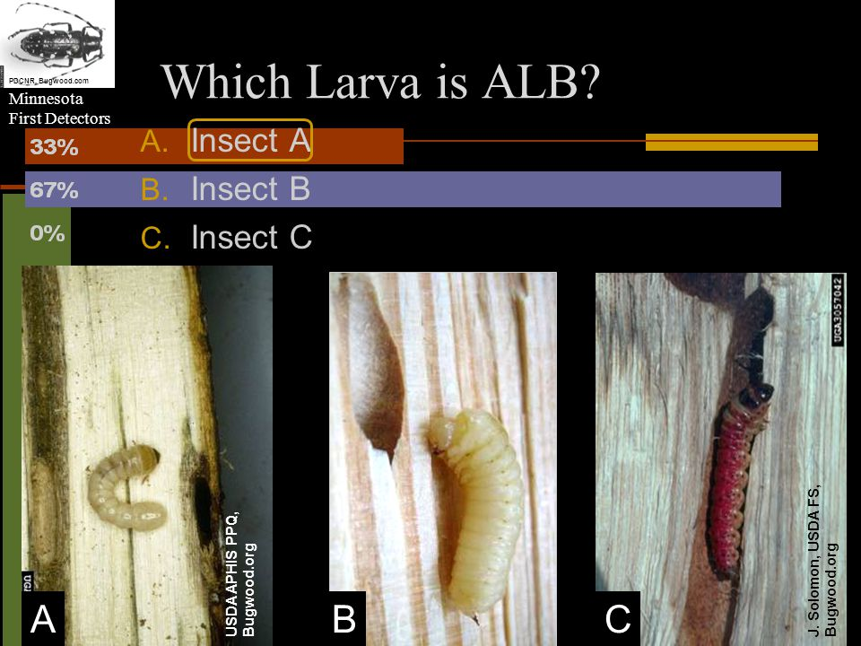 Minnesota First Detectors J. Solomon, USDA FS, Bugwood.org USDA APHIS PPQ, Bugwood.org Which Larva is ALB? A. Insect A B. Insect B C. Insect C ABC PDC
