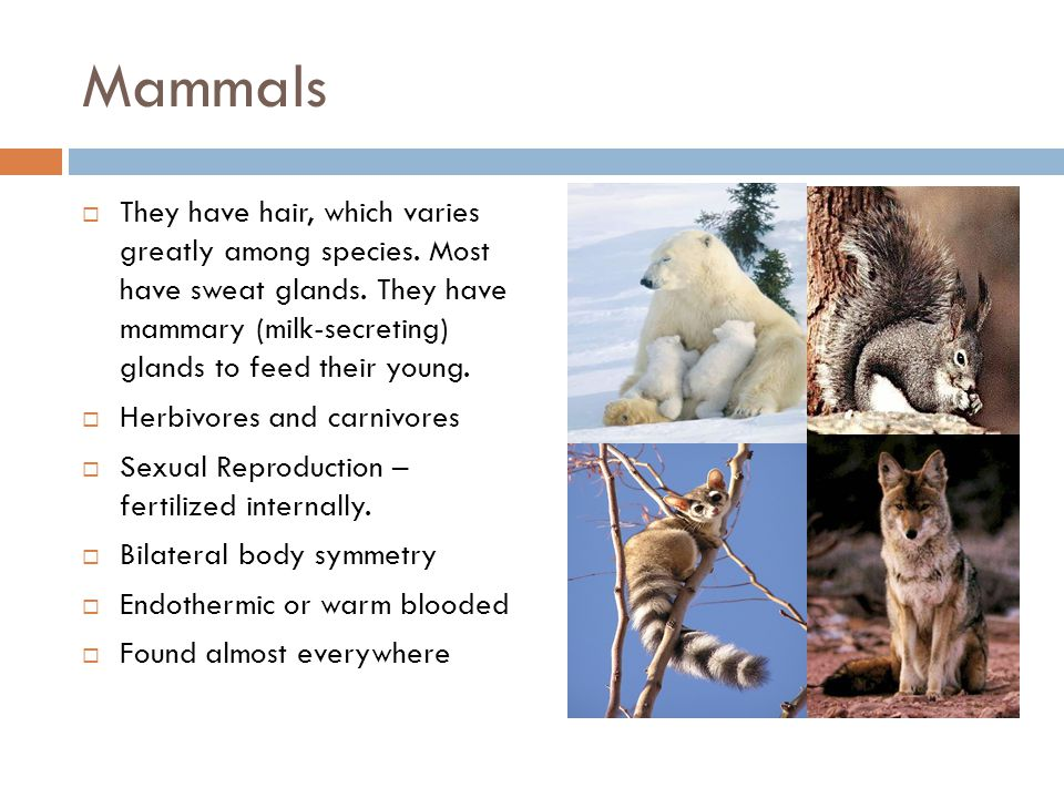 Mammals  They have hair, which varies greatly among species.