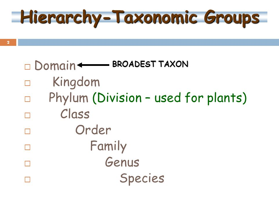 2 Hierarchy-Taxonomic Groups  Domain  Kingdom  Phylum (Division – used for plants)  Class  Order  Family  Genus  Species BROADEST TAXON