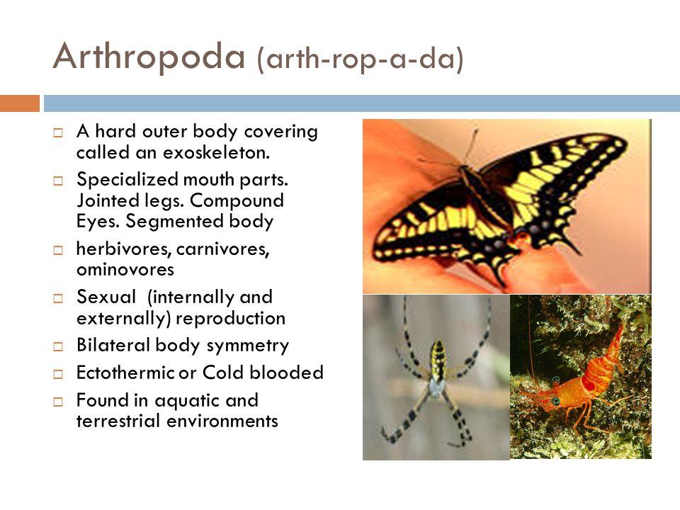 Arthropoda (arth-rop-a-da)  A hard outer body covering called an exoskeleton.