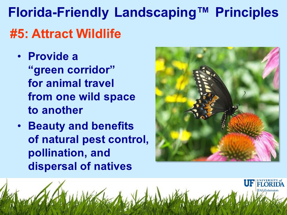 #5: Attract Wildlife Provide a green corridor for animal travel from one wild space to another Beauty and benefits of natural pest control, pollination, and dispersal of natives Florida-Friendly Landscaping™ Principles