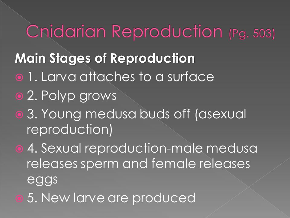 Main Stages of Reproduction  1. Larva attaches to a surface  2. Polyp grows  3. Young medusa buds off (asexual reproduction)  4. Sexual reproducti