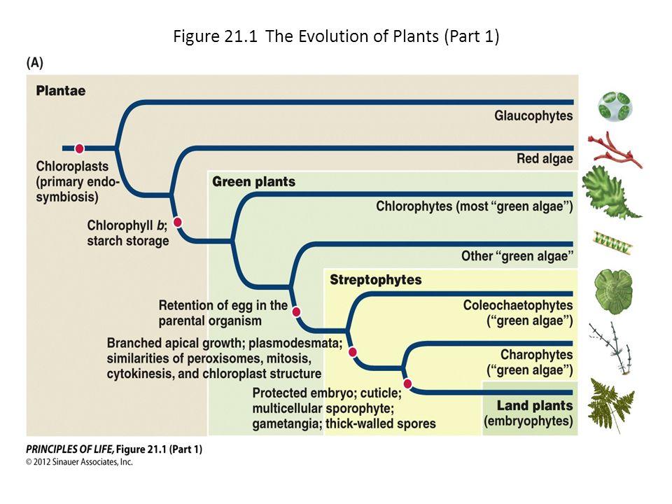 Figure 21.1 The Evolution of Plants (Part 1)