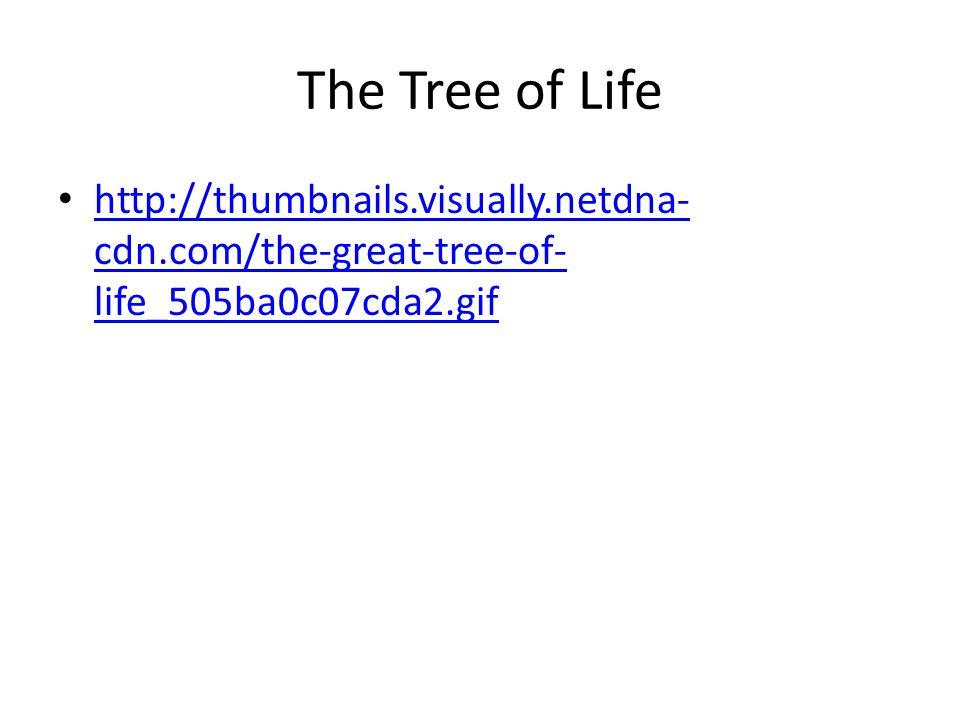 The Tree of Life http://thumbnails.visually.netdna- cdn.com/the-great-tree-of- life_505ba0c07cda2.gif http://thumbnails.visually.netdna- cdn.com/the-g