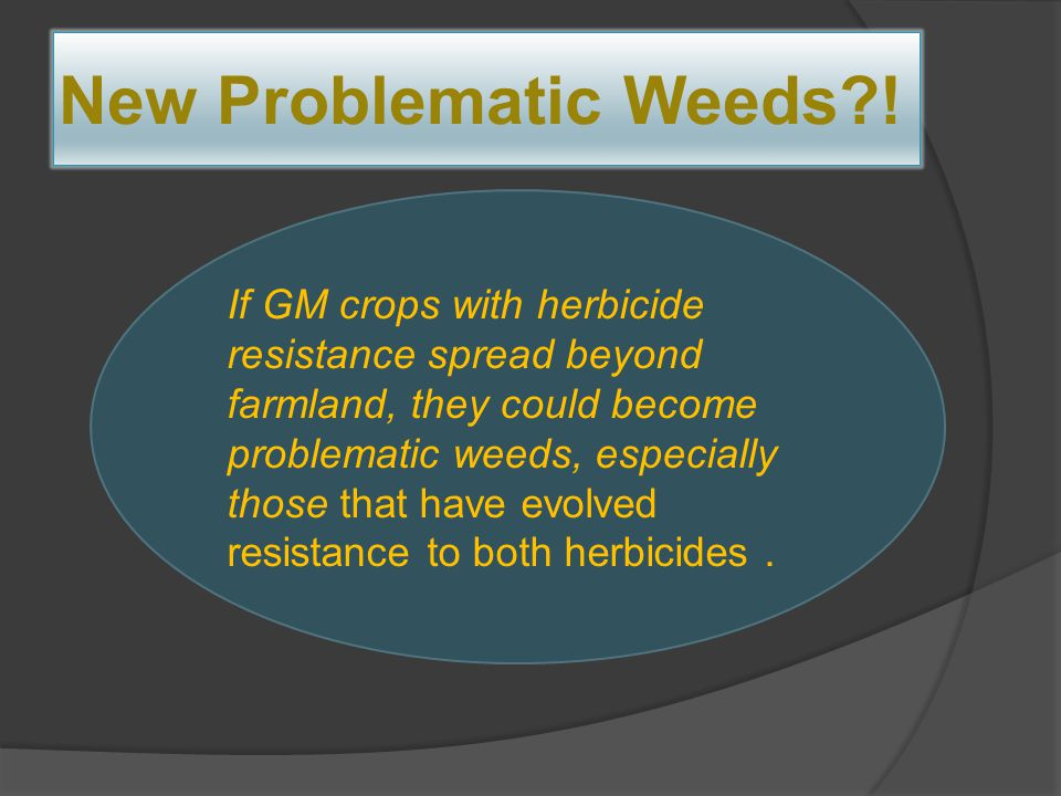 New Problematic Weeds?! If GM crops with herbicide resistance spread beyond farmland, they could become problematic weeds, especially those that have