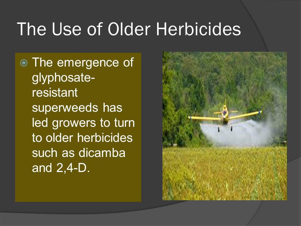 The Use of Older Herbicides  The emergence of glyphosate- resistant superweeds has led growers to turn to older herbicides such as dicamba and 2,4-D.