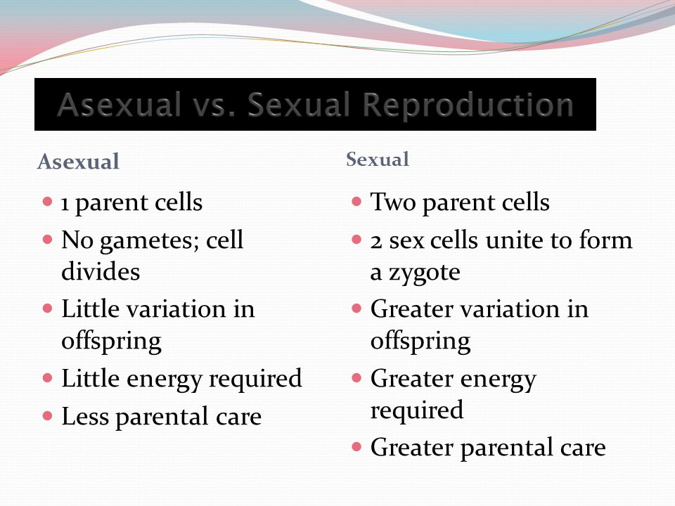Asexual Sexual 1 parent cells No gametes; cell divides Little variation in offspring Little energy required Less parental care Two parent cells 2 sex cells unite to form a zygote Greater variation in offspring Greater energy required Greater parental care