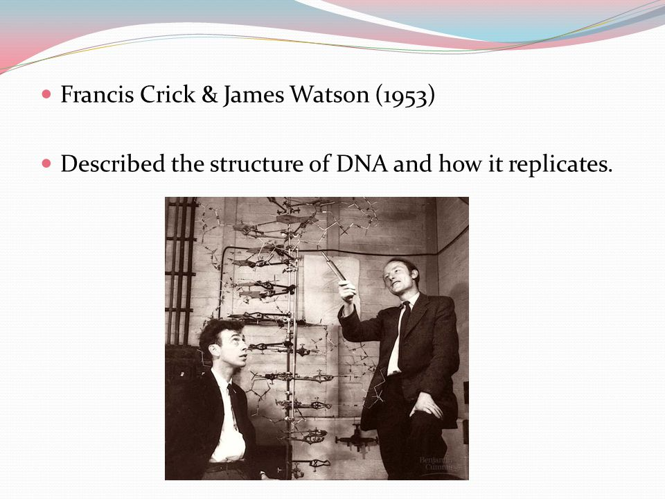 Francis Crick & James Watson (1953) Described the structure of DNA and how it replicates.