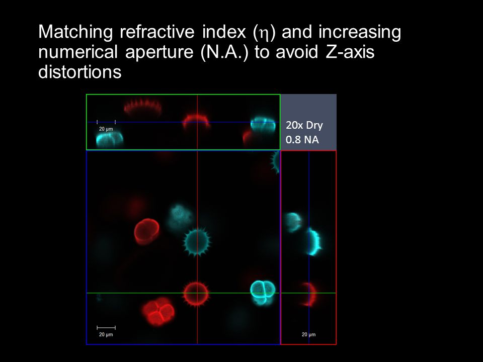 Matching refractive index (  ) and increasing numerical aperture (N.A.) to avoid Z-axis distortions 20x Dry 0.8 NA